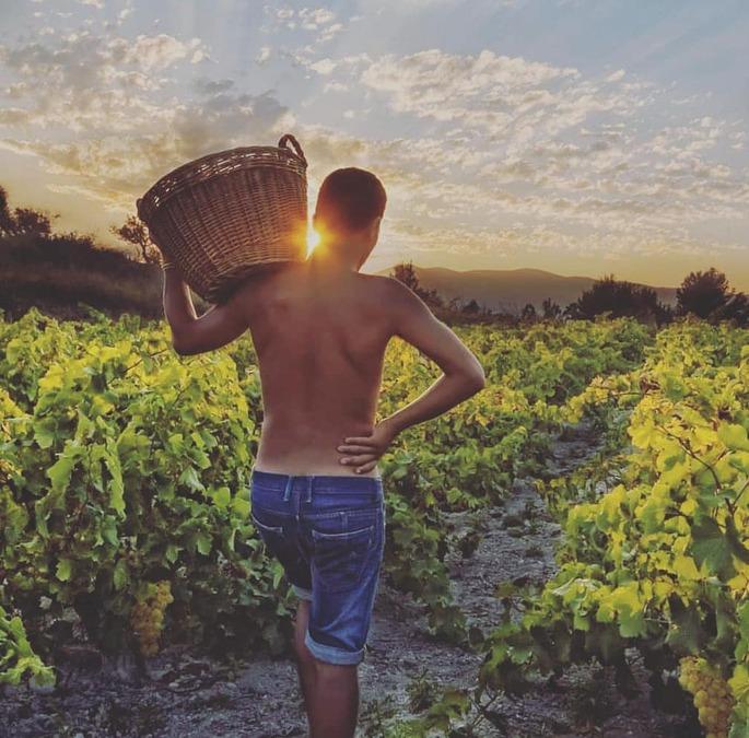 The Joy of the grape harvestSpain News | The Joy of the grape harvest