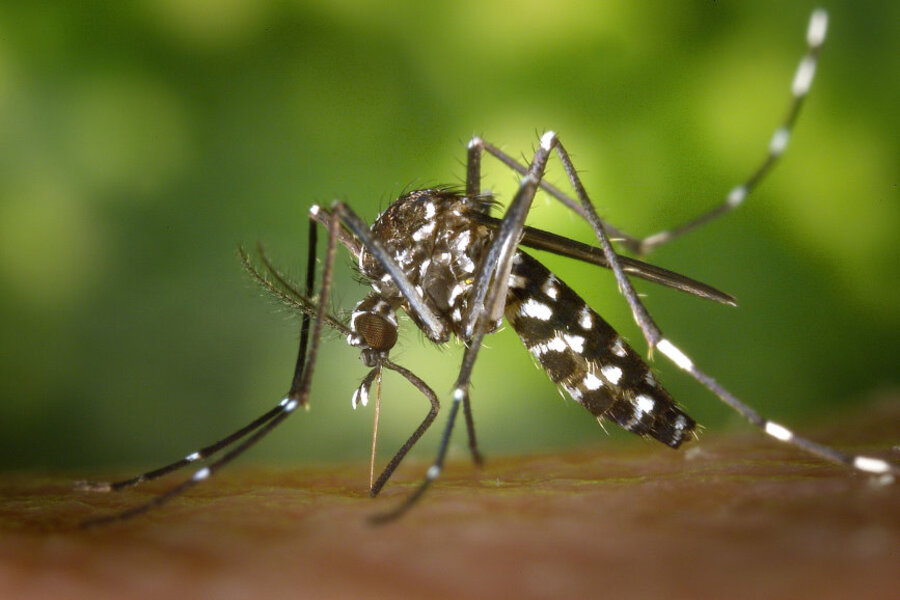 Some Things You Need to Know About Mosquitoes...Local News | Some Things You Need to Know About Mosquitoes...